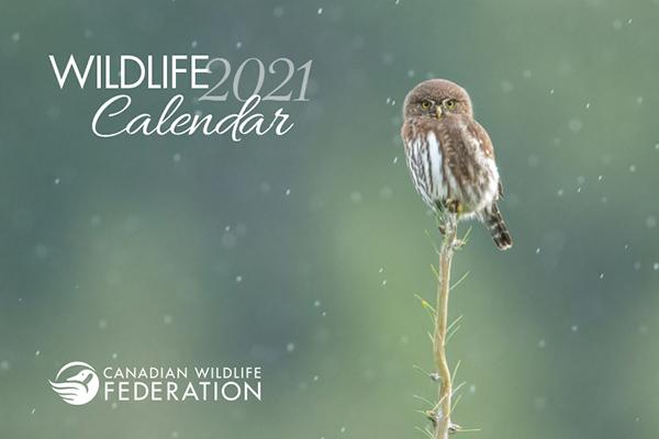 Free Wildlife 2021 Calendar