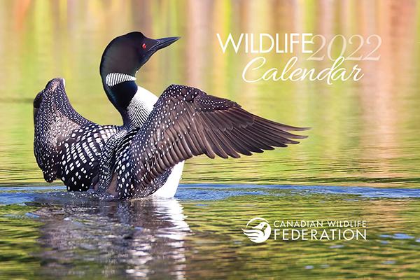 Free 2022 Canadian Wildlife Calendar